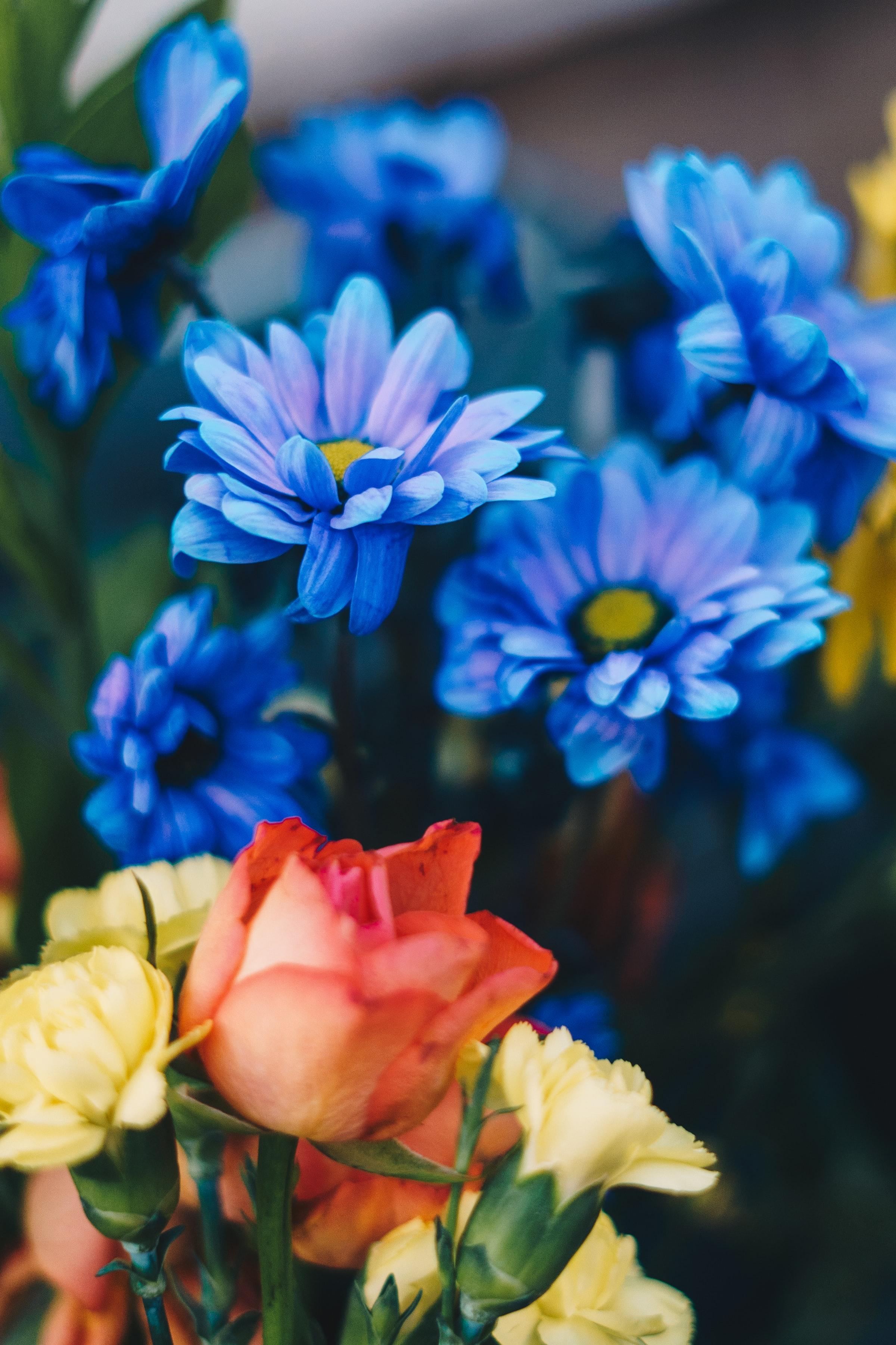 158013 скачать обои Цветы, Букет, Синий, Хризантемы, Розы - заставки и картинки бесплатно