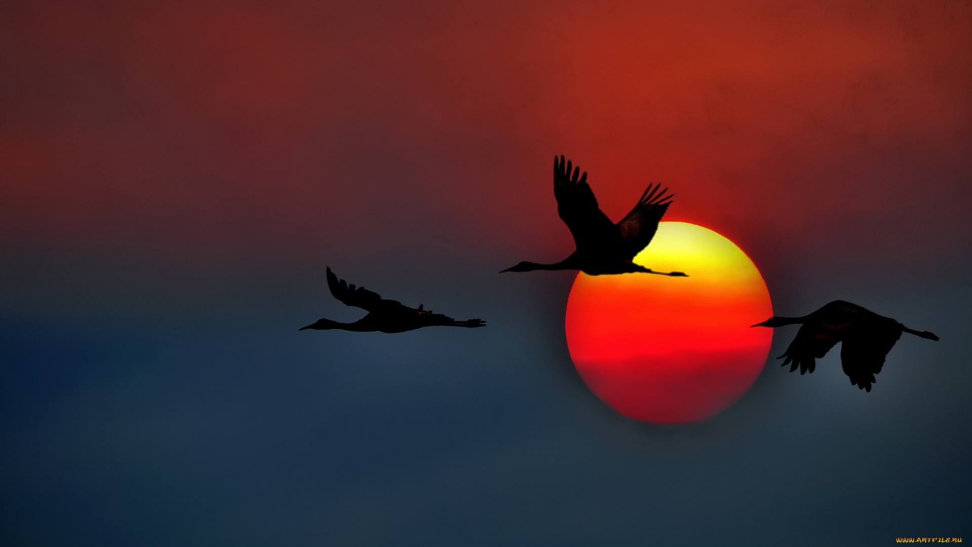 17829 download wallpaper Birds, Sunset, Background, Cranes screensavers and pictures for free