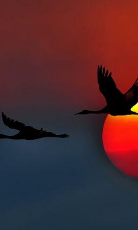 17829 скачать обои Птицы, Закат, Фон, Журавли - заставки и картинки бесплатно