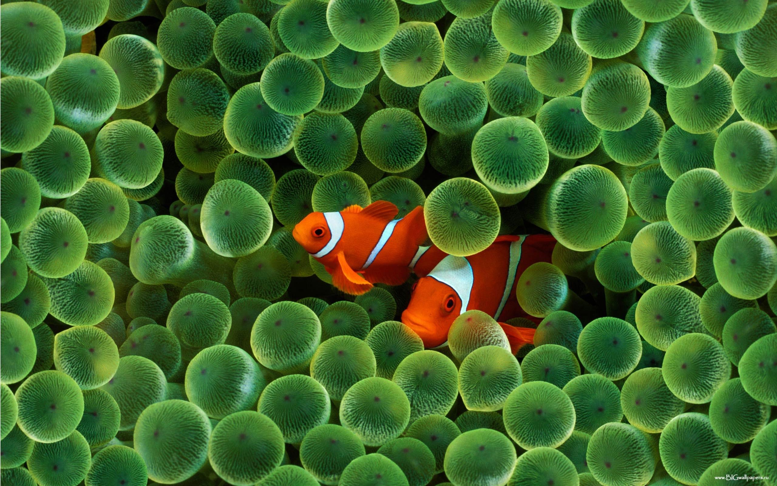 3739 Заставки и Обои Рыбы на телефон. Скачать Рыбы, Животные картинки бесплатно