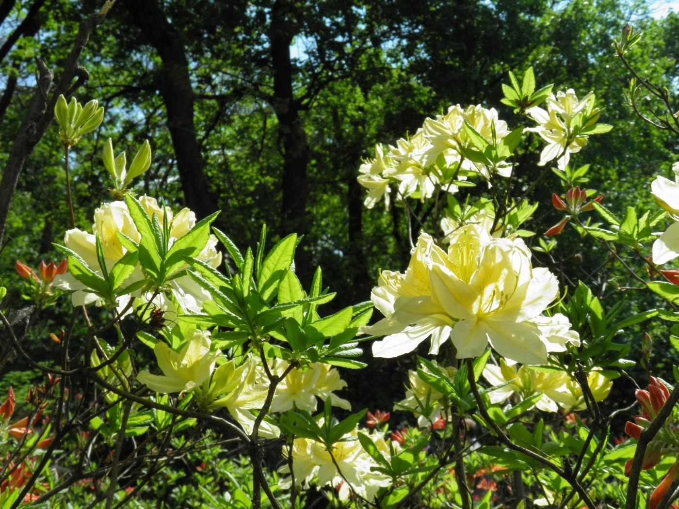 42882 скачать обои Растения, Пейзаж - заставки и картинки бесплатно