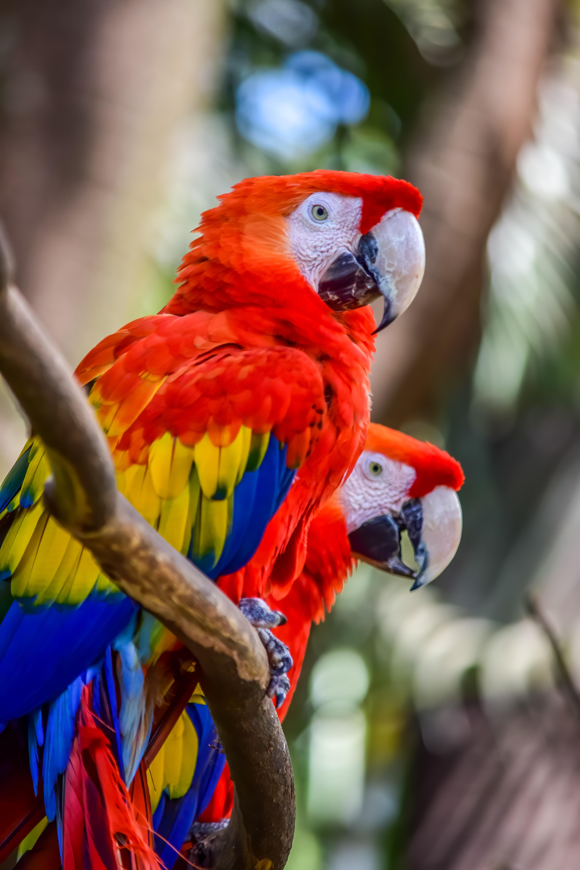 132289 скачать обои Животные, Ара, Попугаи, Разноцветный, Дикая Природа, Птицы - заставки и картинки бесплатно