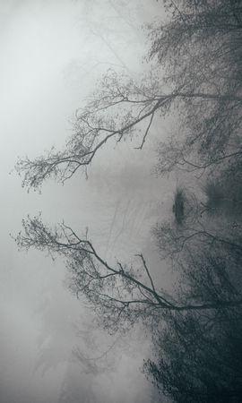156866 скачать обои Природа, Озеро, Туман, Ветки, Отражение, Пейзаж - заставки и картинки бесплатно