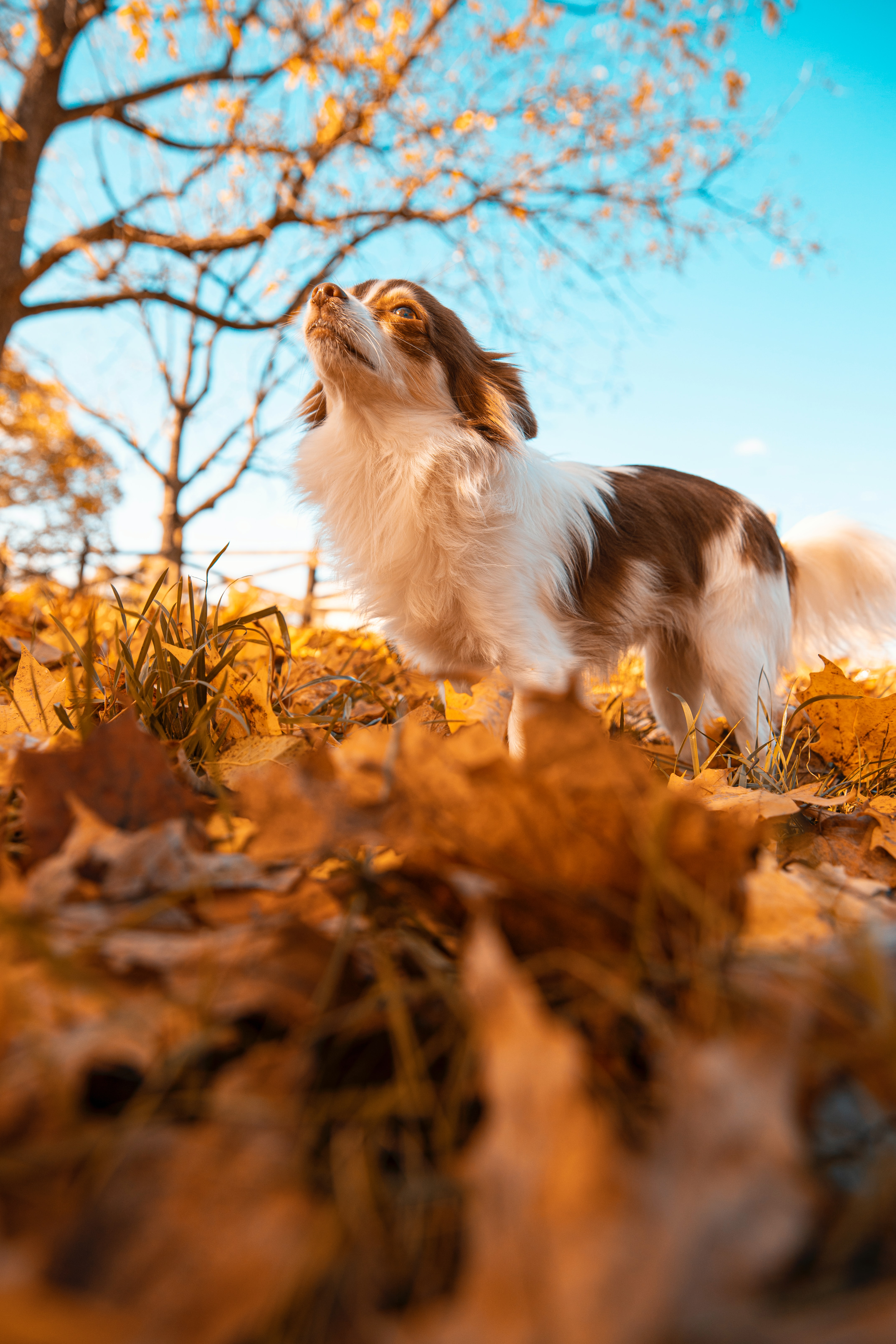 89159 Screensavers and Wallpapers Pet for phone. Download Animals, Dog, Pet, Fluffy, Leaves, Autumn pictures for free