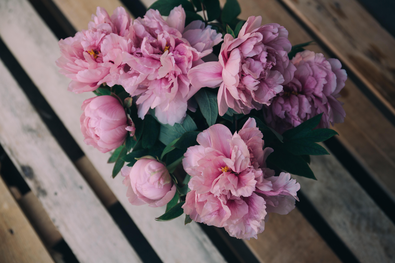 77696 Hintergrundbild herunterladen Blumen, Rosa, Pfingstrosen, Strauß, Bouquet - Bildschirmschoner und Bilder kostenlos