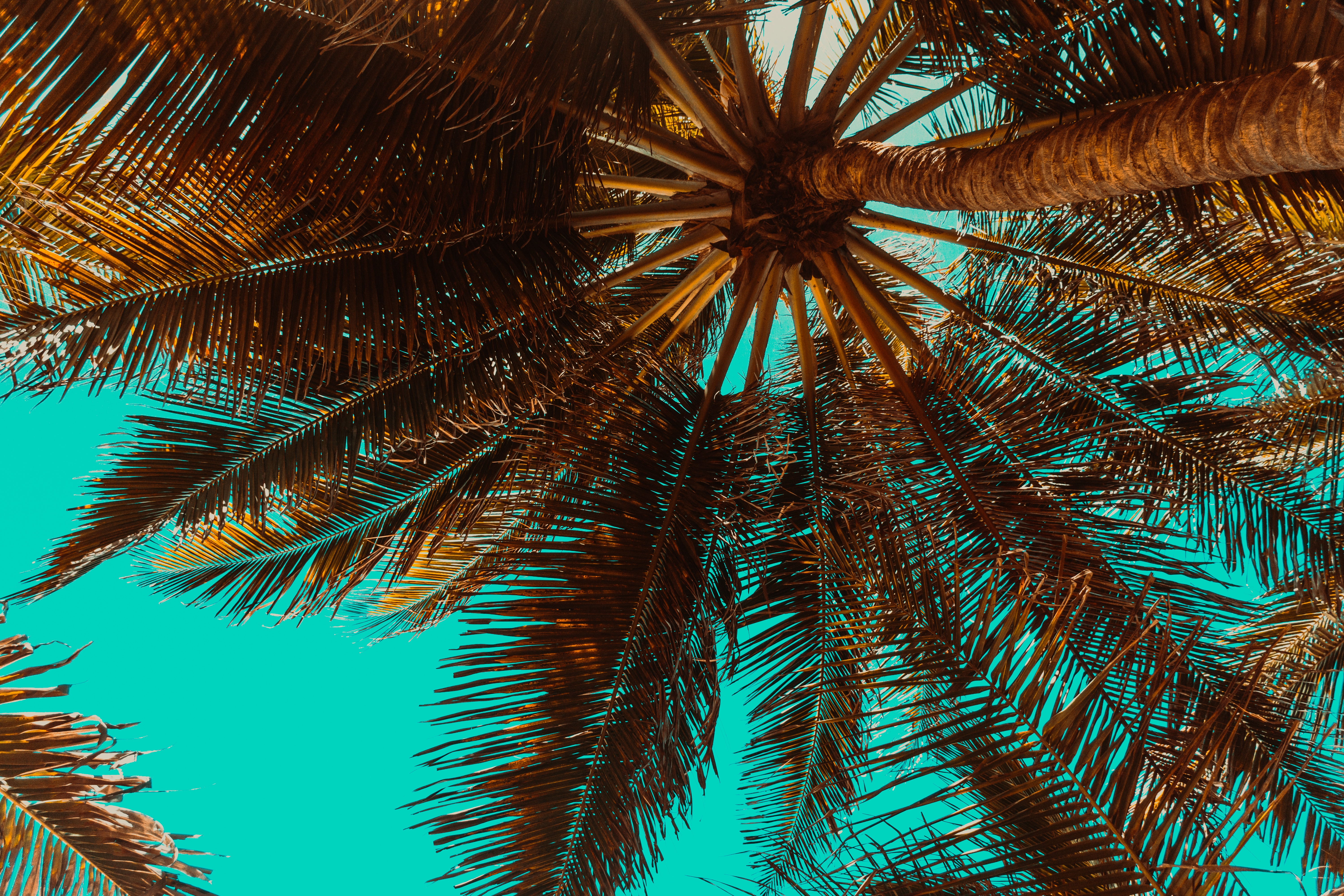 94788 download wallpaper Nature, Palm, Branches, Wood, Tree, Tropics, Bottom View screensavers and pictures for free