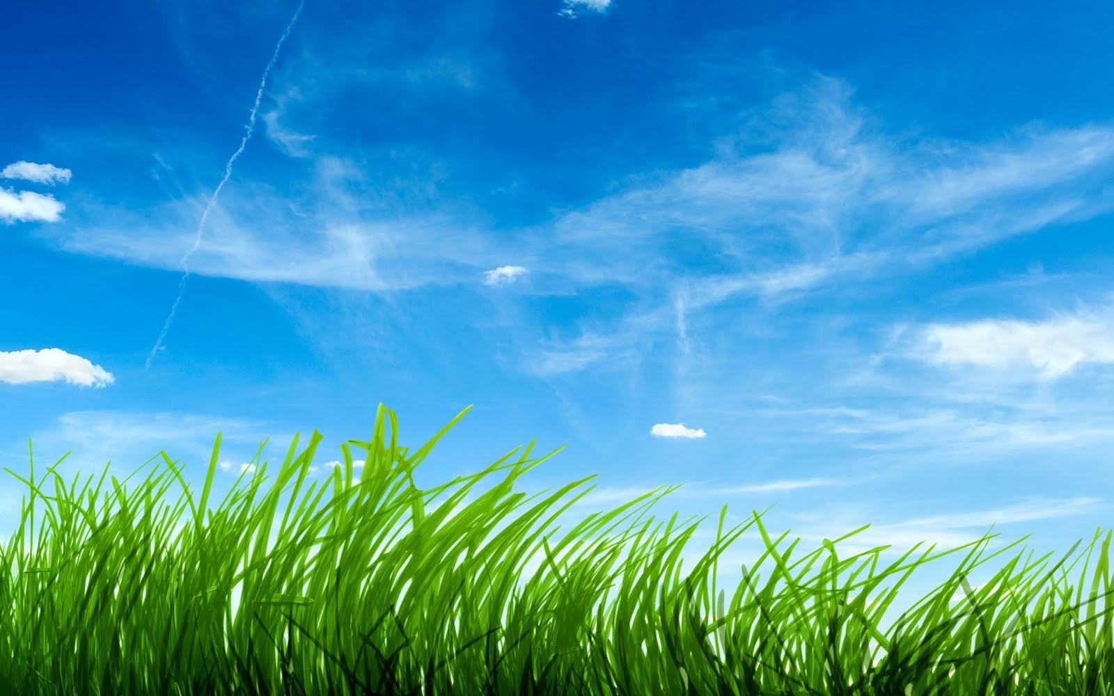 14278 скачать обои Трава, Фон, Небо - заставки и картинки бесплатно