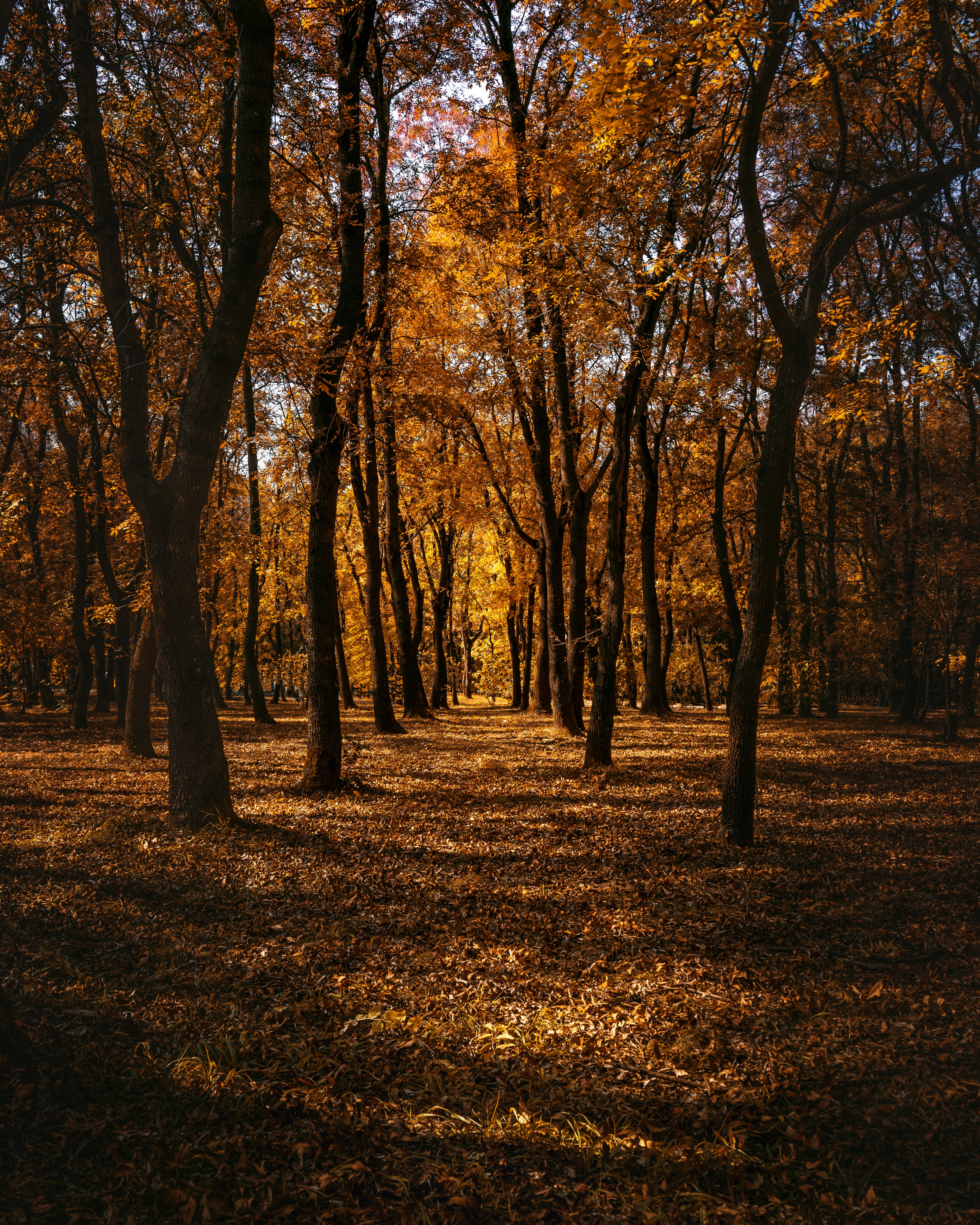 157266 download wallpaper Forest, Autumn, Nature, Trees, Park, Path screensavers and pictures for free