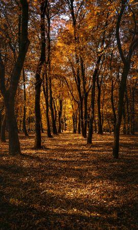 157266 скачать обои Природа, Осень, Лес, Деревья, Парк, Тропинка - заставки и картинки бесплатно