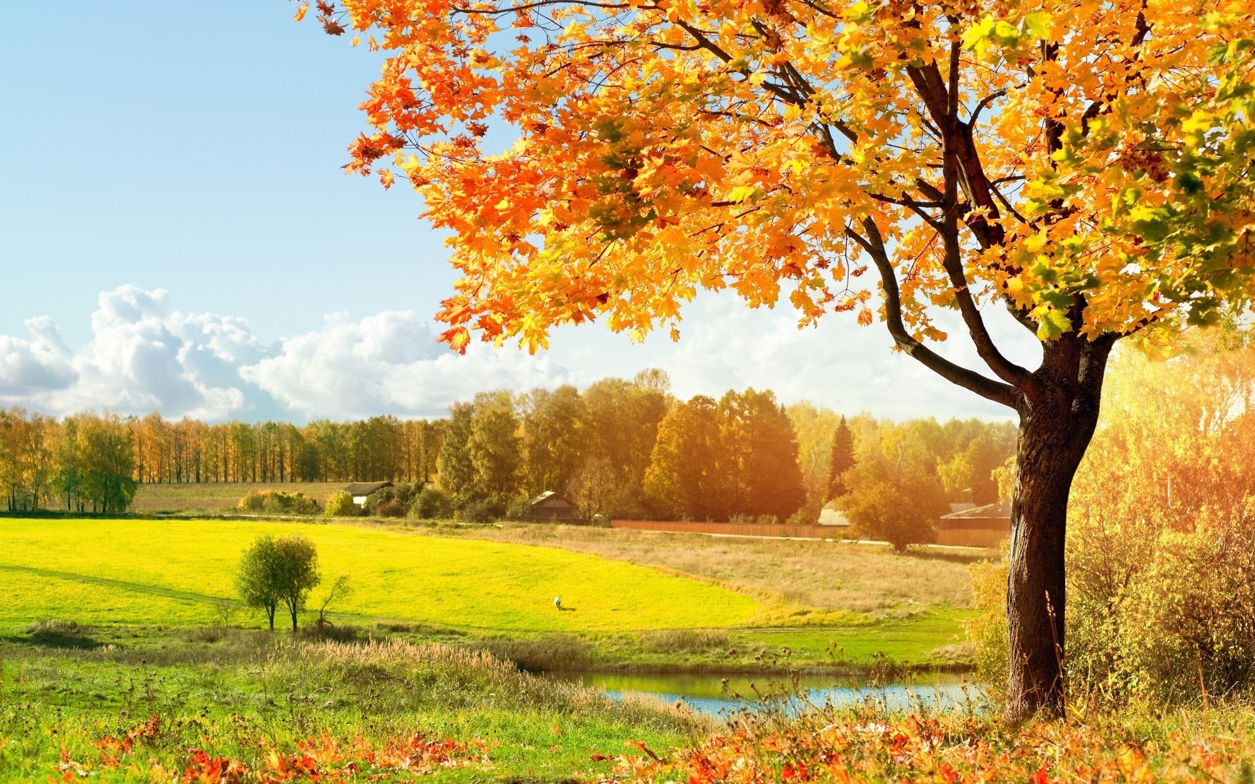 25942 скачать обои Пейзаж, Деревья, Поля, Осень - заставки и картинки бесплатно