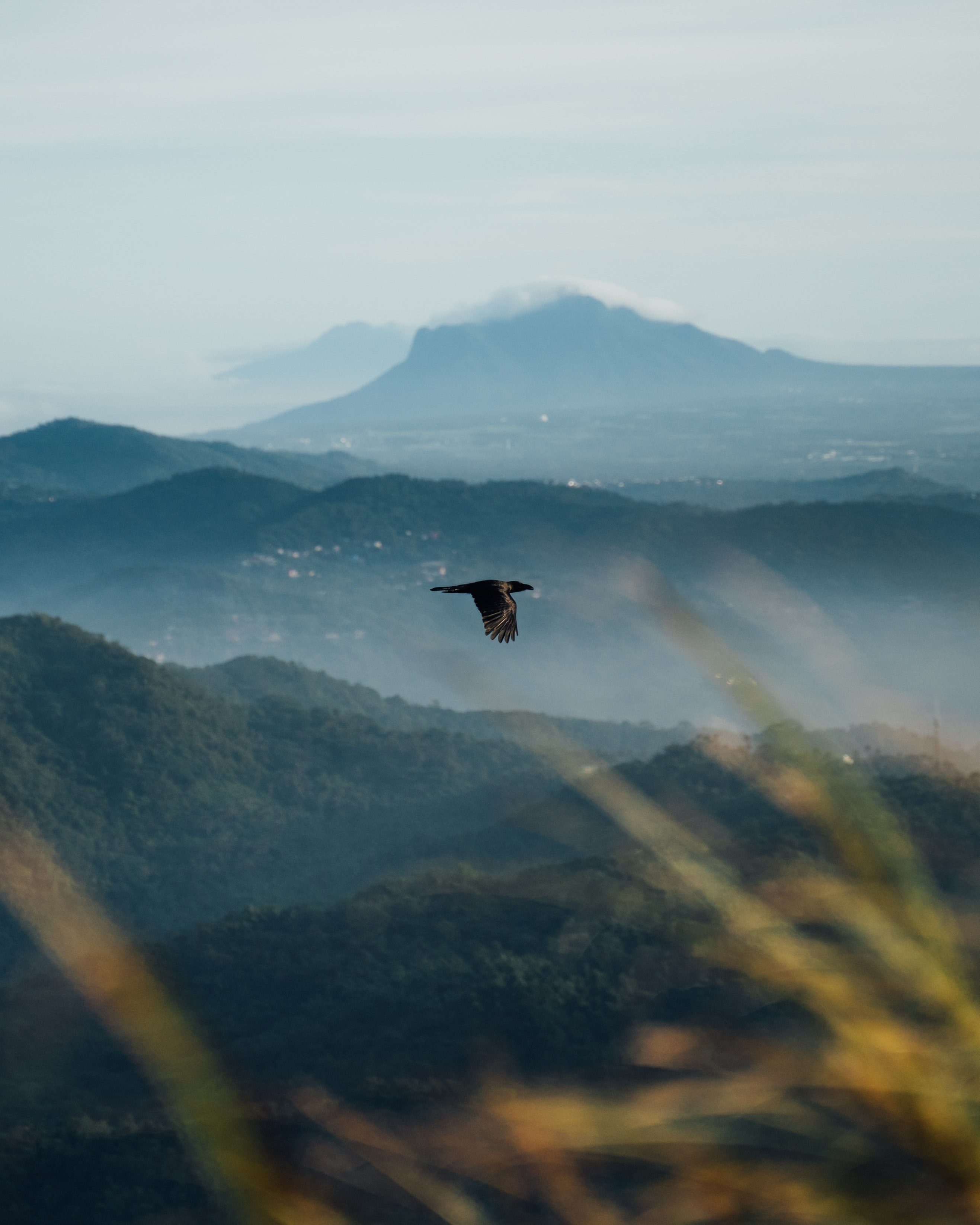 71422 download wallpaper Animals, Raven, Bird, Flight, Wildlife, Mountains screensavers and pictures for free