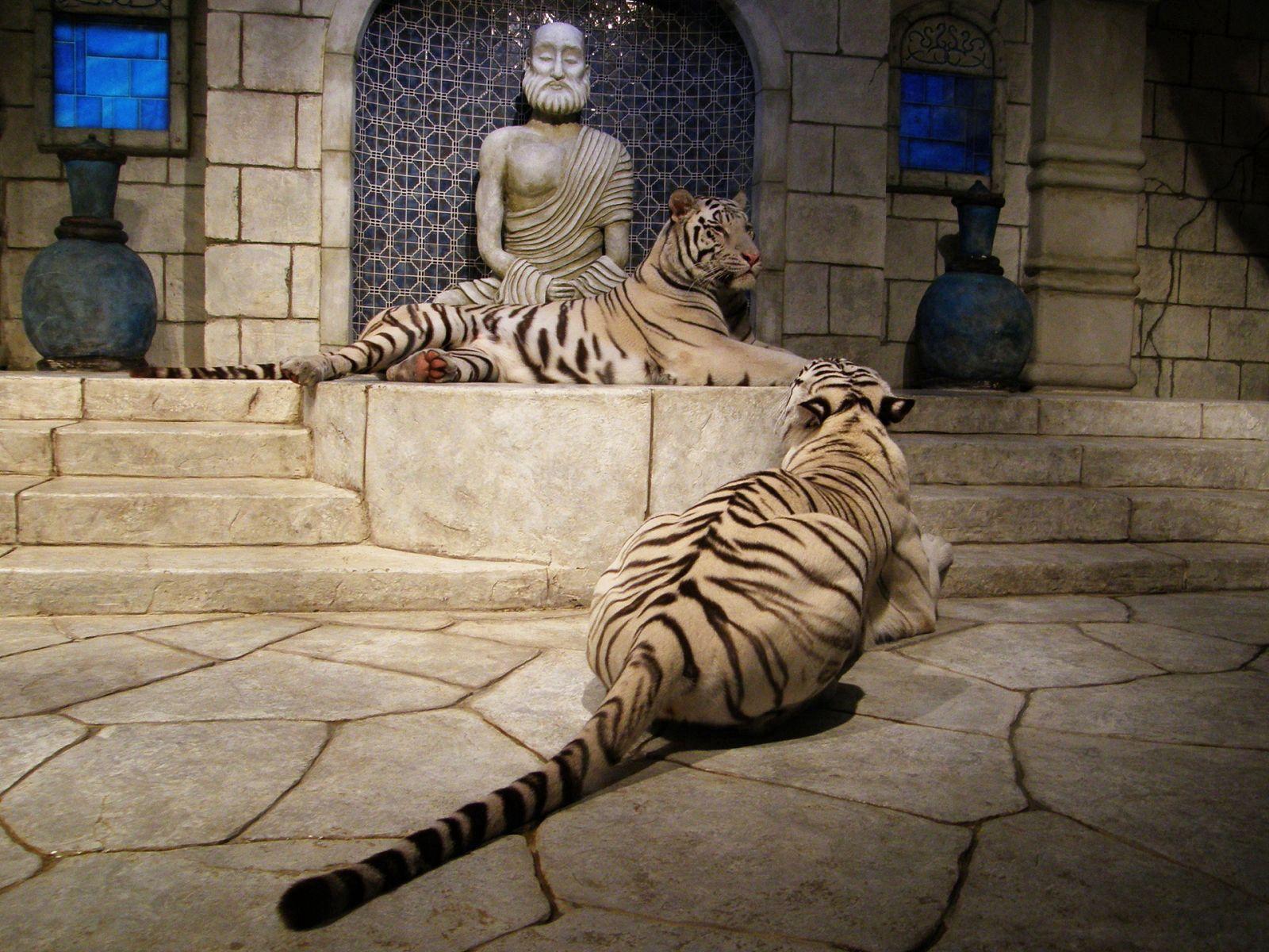 106577壁紙のダウンロード動物, ルーム, 部屋, アルビノ, 構内, 彫像, 阪神タイガース-スクリーンセーバーと写真を無料で