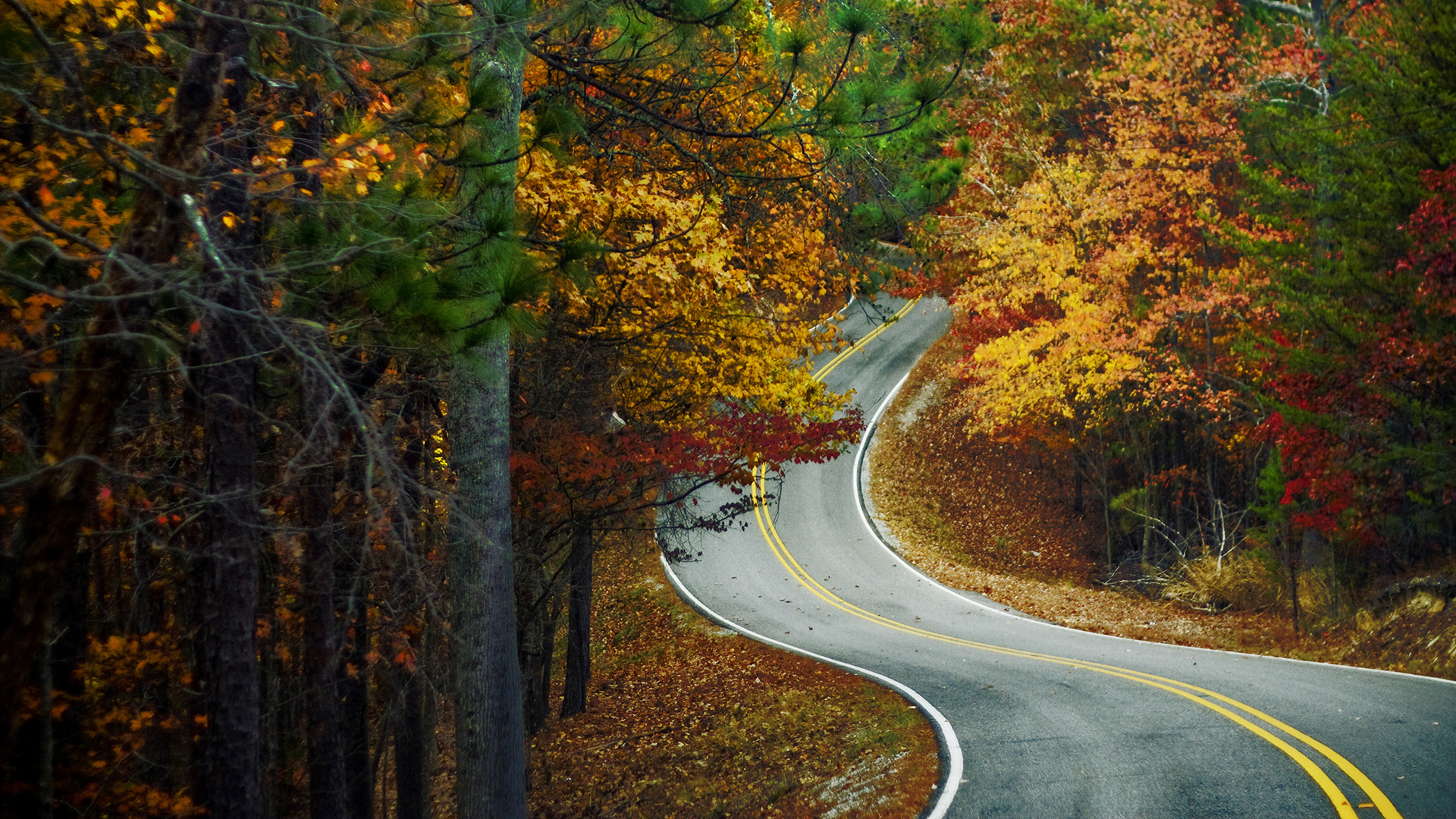 31846 download wallpaper Landscape, Roads, Autumn screensavers and pictures for free
