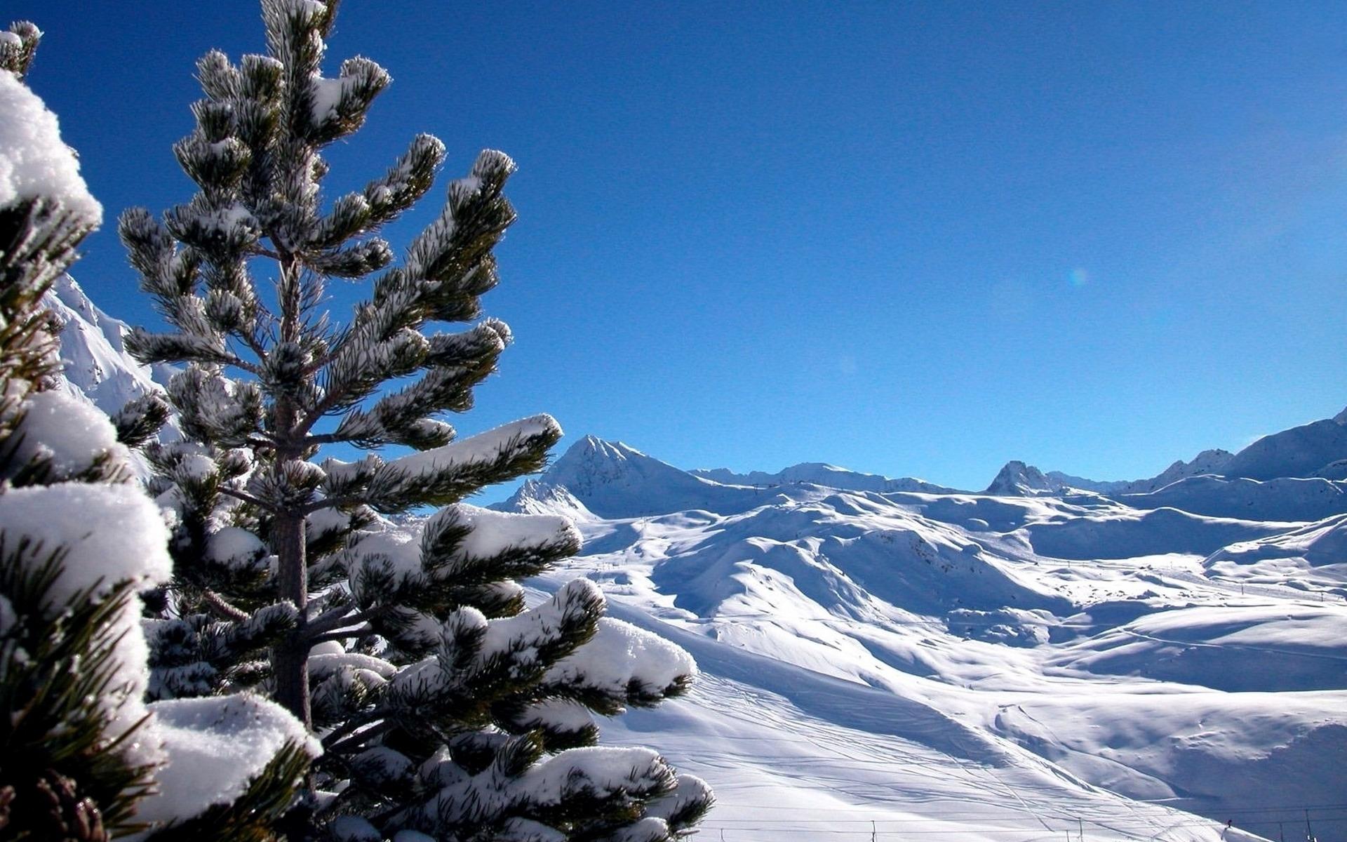 29500 скачать обои Пейзаж, Зима, Горы, Сосны - заставки и картинки бесплатно