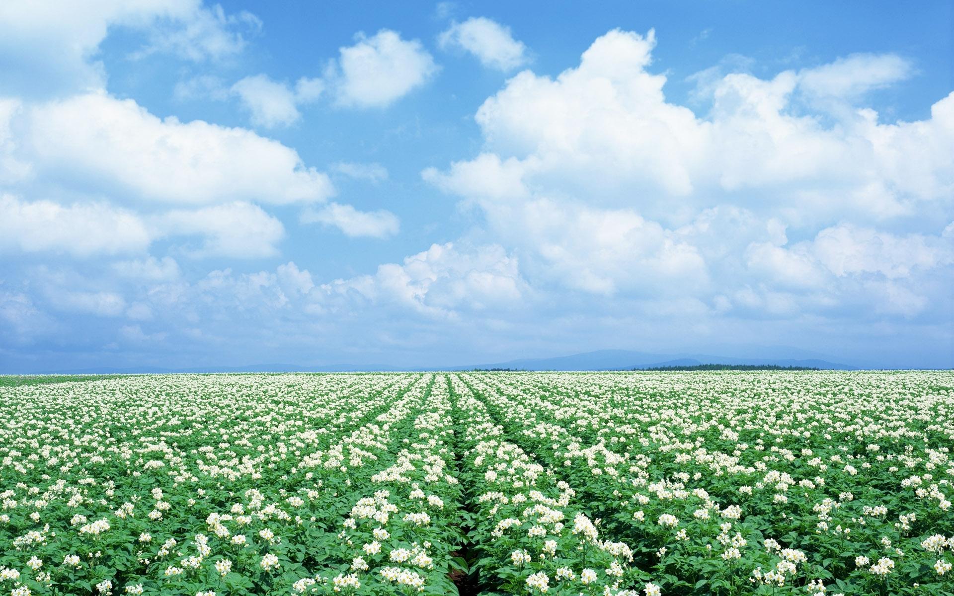 3380 скачать обои Пейзаж, Цветы, Небо - заставки и картинки бесплатно