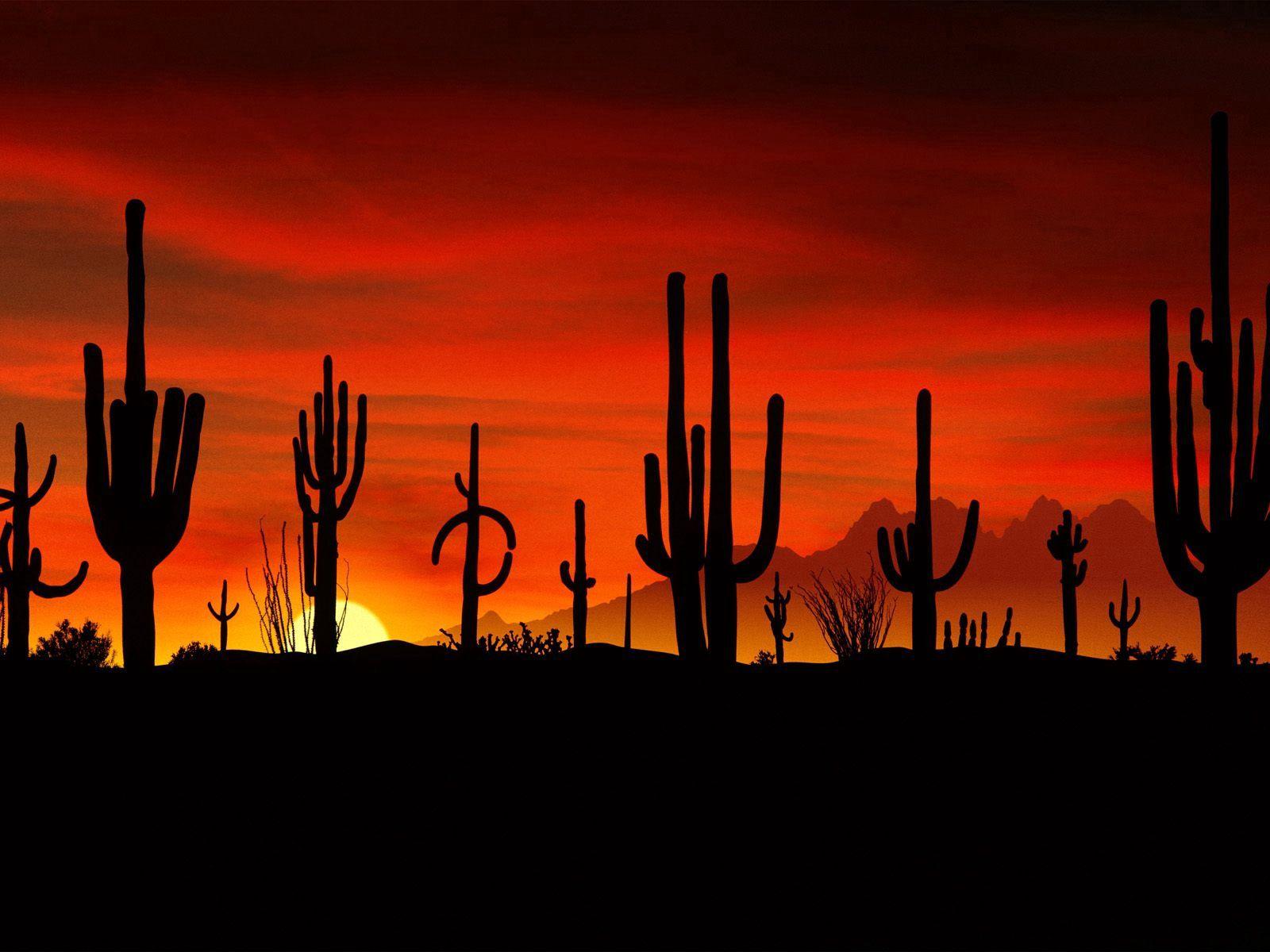 137871 скачать обои Кактусы, Природа, Закат, Солнце, Пустыня, Очертания, Вечер, Фигуры - заставки и картинки бесплатно