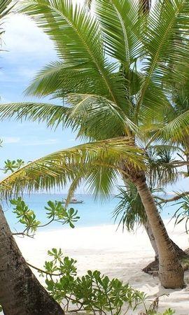 28945 скачать обои Пейзаж, Пляж, Пальмы - заставки и картинки бесплатно