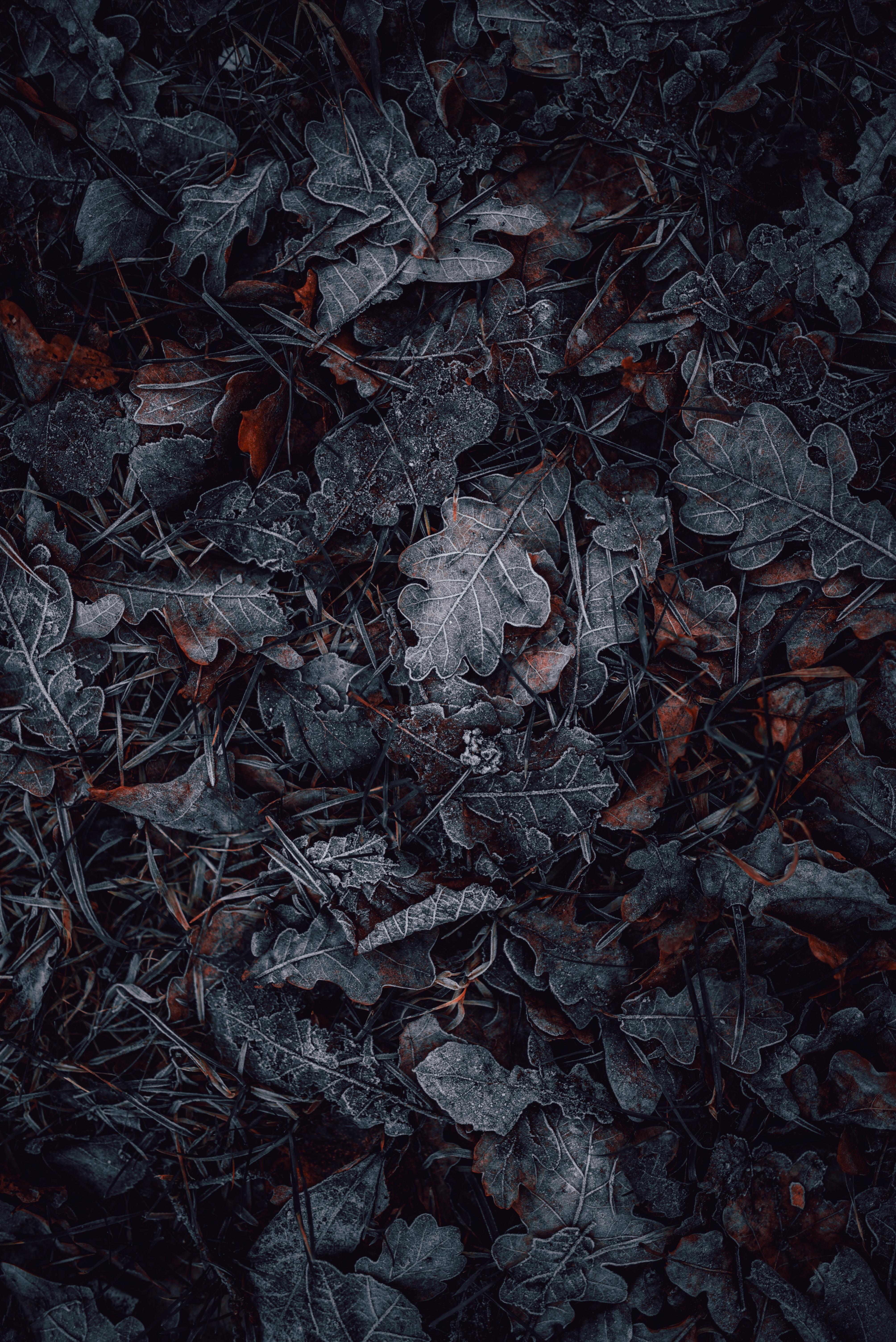 51175 скачать обои Иней, Природа, Трава, Осень, Листья, Макро - заставки и картинки бесплатно