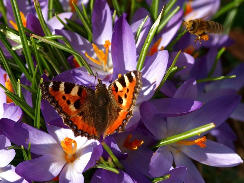 41492 download wallpaper Plants, Landscape, Butterflies, Flowers, Insects screensavers and pictures for free