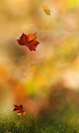 21899 скачать обои Растения, Осень, Листья - заставки и картинки бесплатно