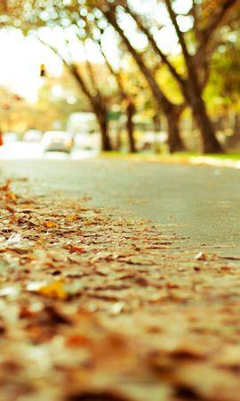 24684 скачать обои Пейзаж, Дороги, Осень, Листья - заставки и картинки бесплатно