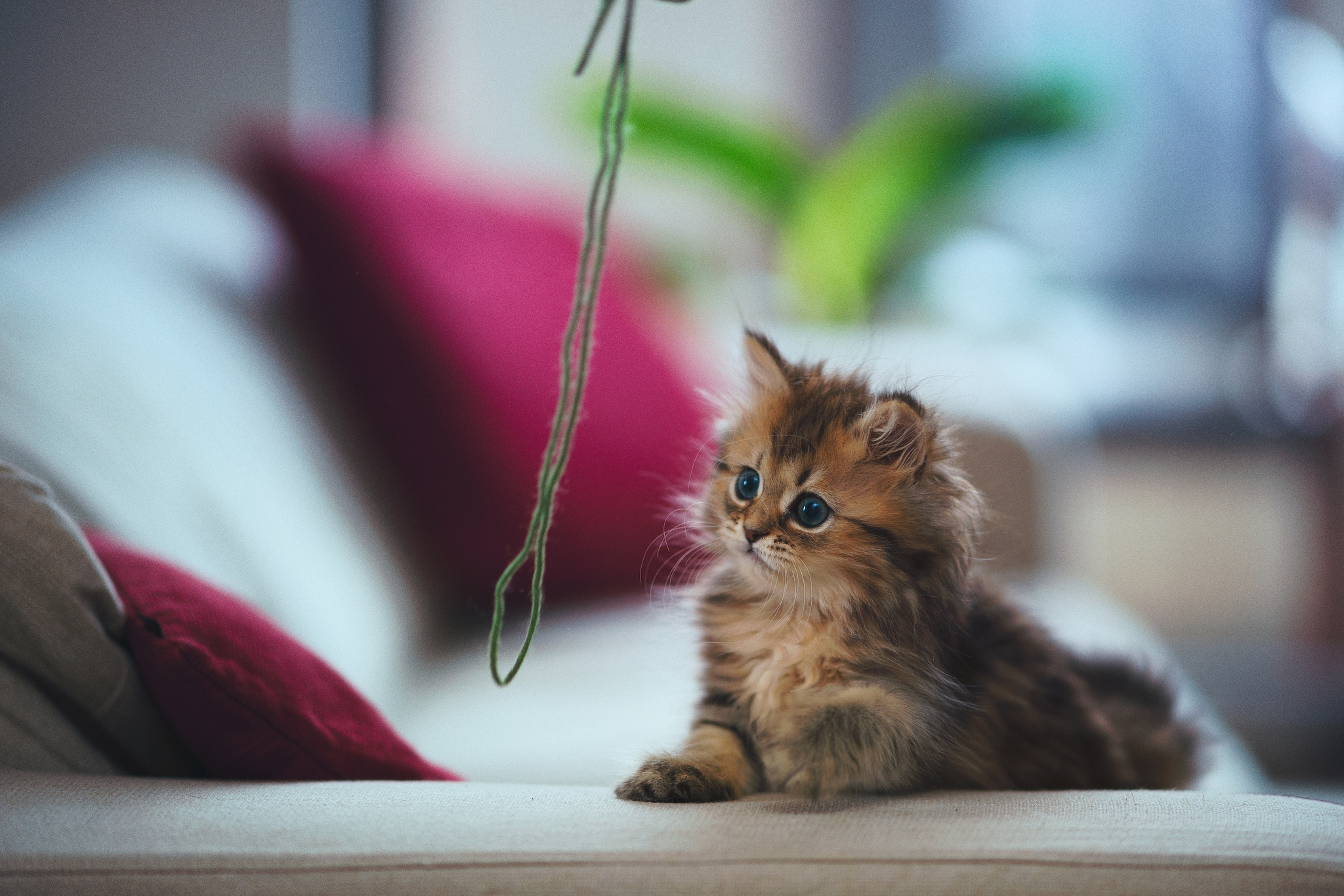 61243 Screensavers and Wallpapers Room for phone. Download Animals, Kitty, Kitten, Threads, Thread, Play, Kid, Tot, Fluffy, Room pictures for free