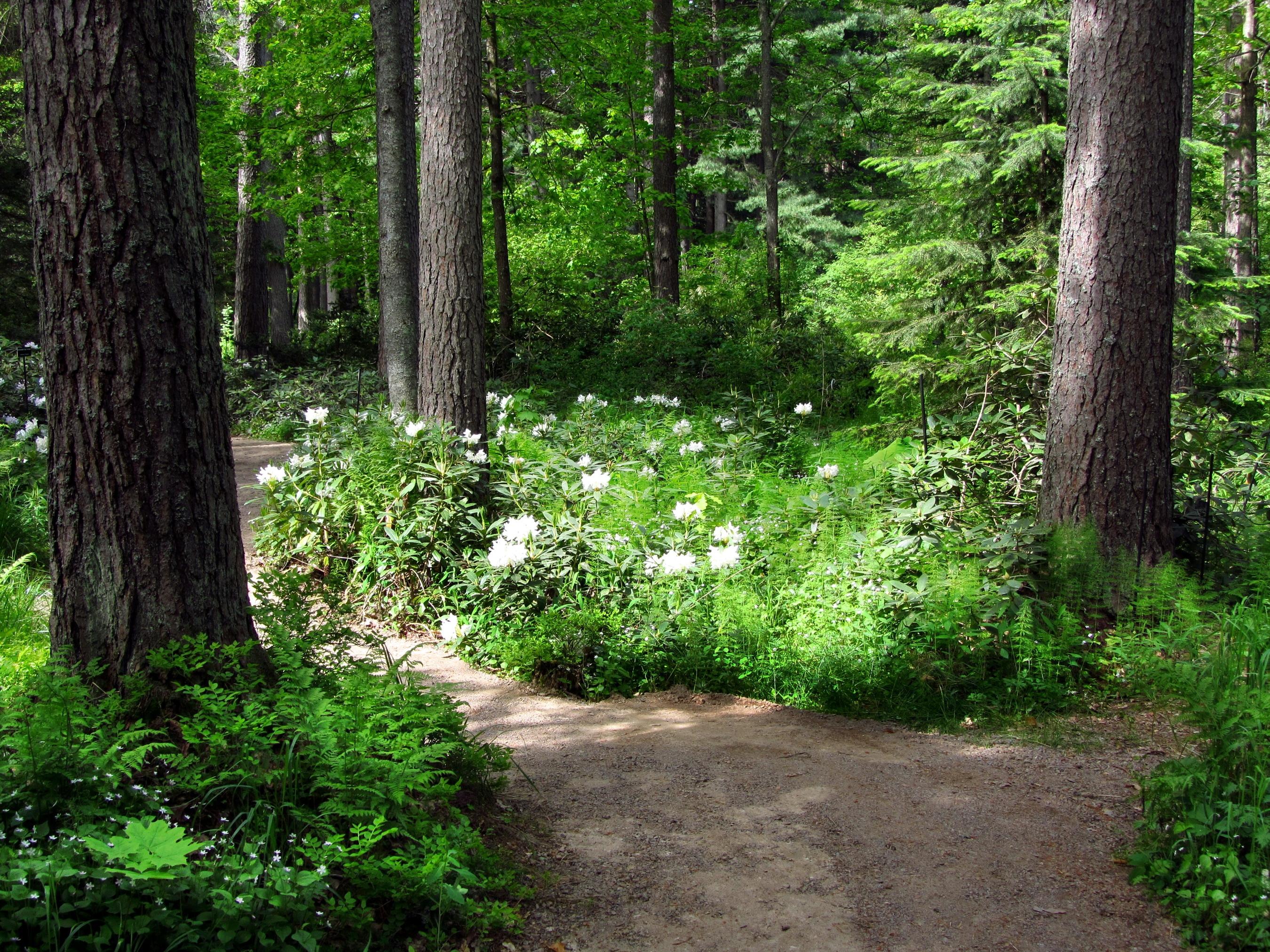 144044 скачать Белые обои на телефон бесплатно, Зеленый, Природа, Цветы, Деревья, Дорожка Белые картинки и заставки на мобильный