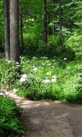 144044 скачать Белые обои на телефон бесплатно, Природа, Деревья, Дорожка, Зеленый, Цветы Белые картинки и заставки на мобильный
