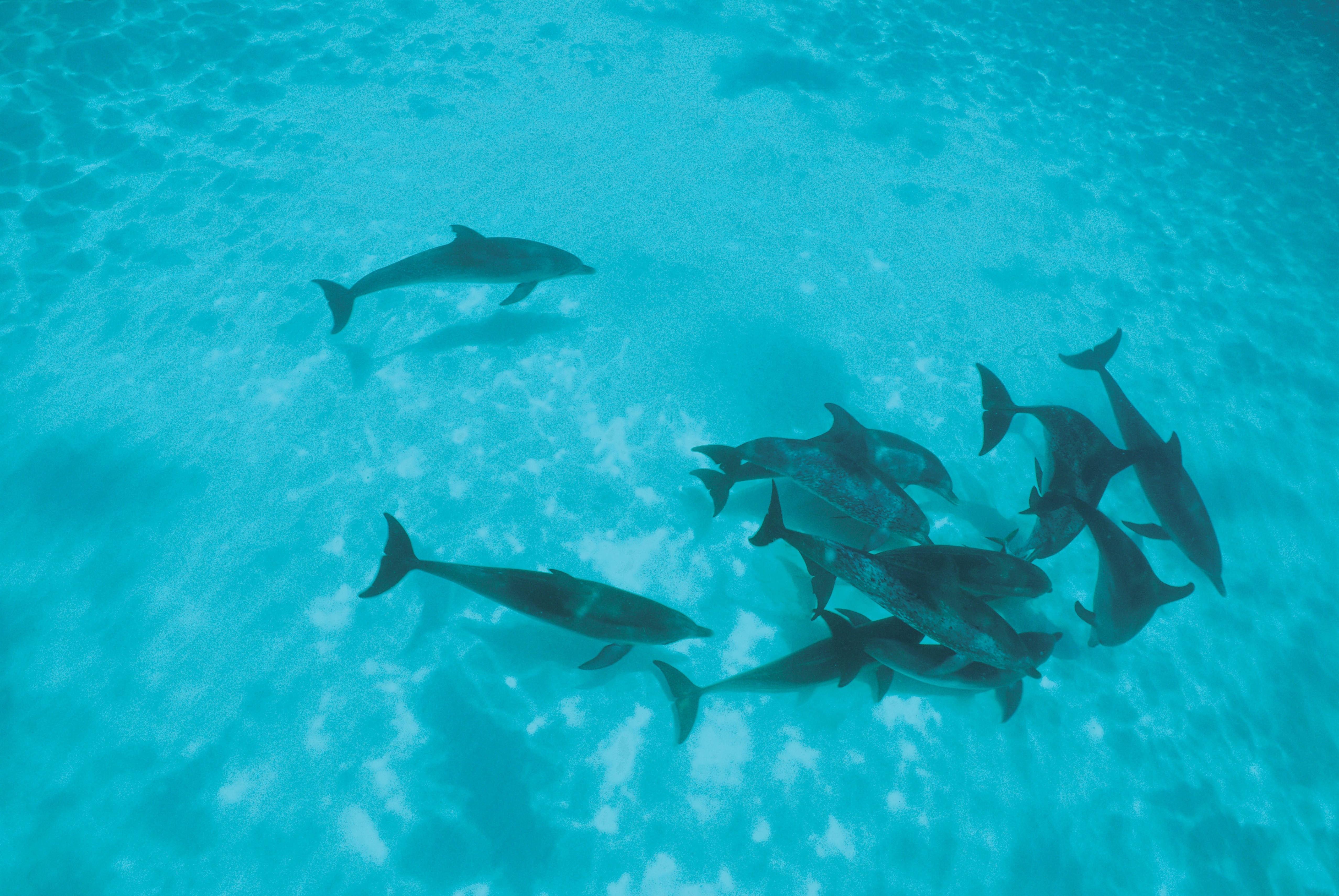 107330 download wallpaper Animals, Dolfins, Flock, Shallow Water, Shoal screensavers and pictures for free