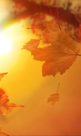 38036 скачать обои Фон, Осень, Листья - заставки и картинки бесплатно