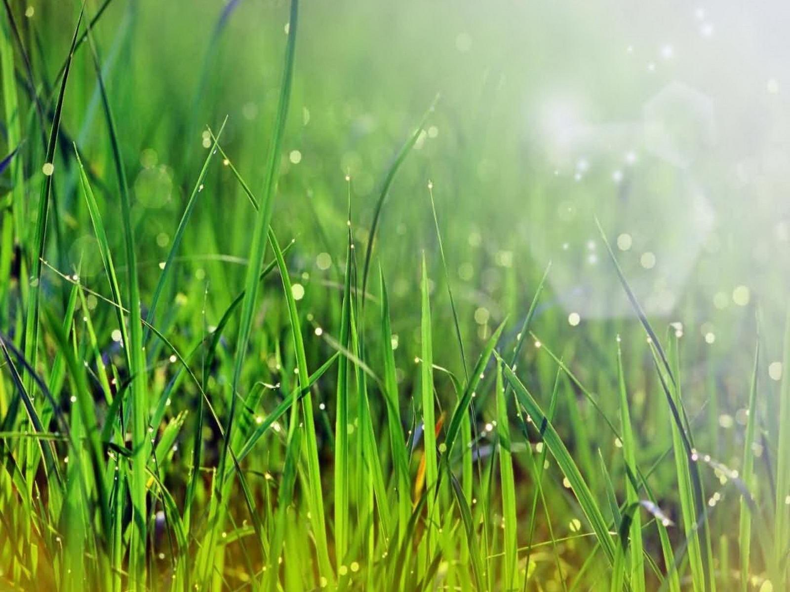 2662 скачать обои Растения, Трава - заставки и картинки бесплатно