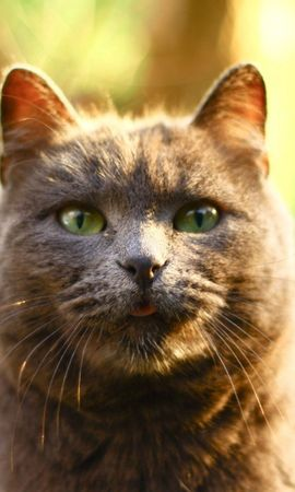 138862 download wallpaper Animals, Cat, Muzzle, Sight, Opinion, Beautiful, Fat, Thick screensavers and pictures for free