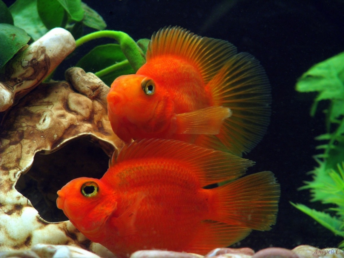 23255 download wallpaper Animals, Aquariums, Fishes screensavers and pictures for free
