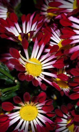 5543 скачать обои Растения, Цветы, Фон - заставки и картинки бесплатно