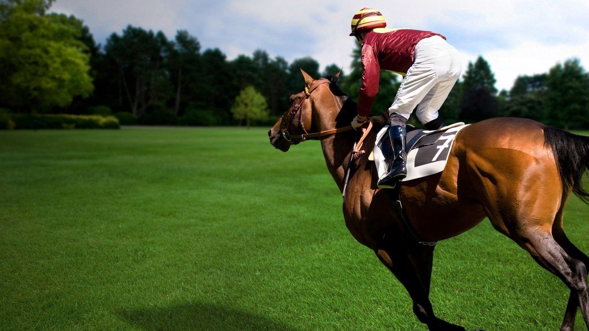 114402 télécharger le fond d'écran Sport, Cheval, Cavalier, Monté, Équestre - économiseurs d'écran et images gratuitement
