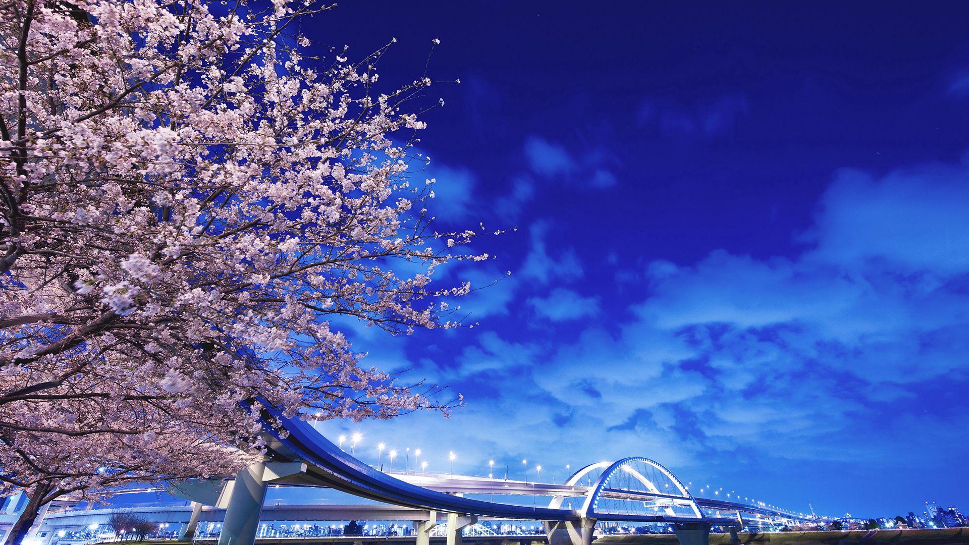 147192 Screensavers and Wallpapers Sakura for phone. Download Cities, Sakura, Bridge, Japan, Hokkaido pictures for free