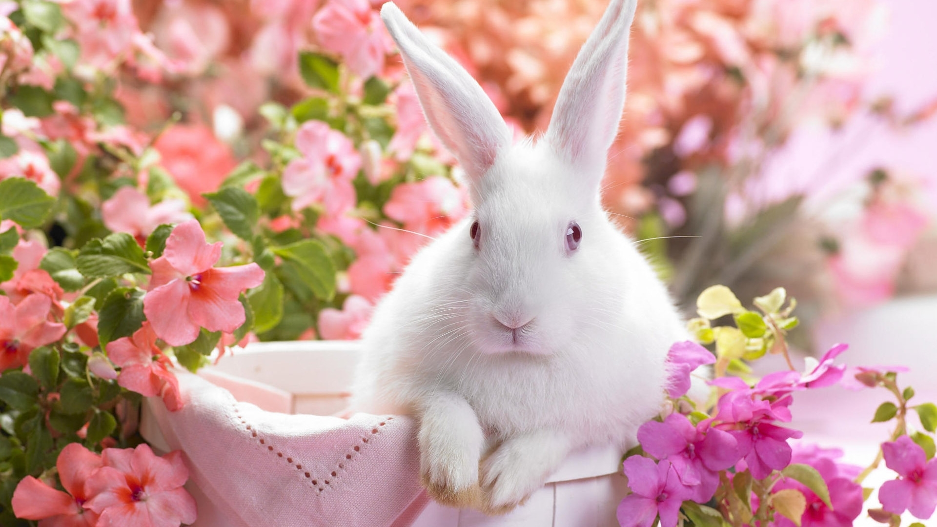 46003 download wallpaper Animals, Rabbits screensavers and pictures for free
