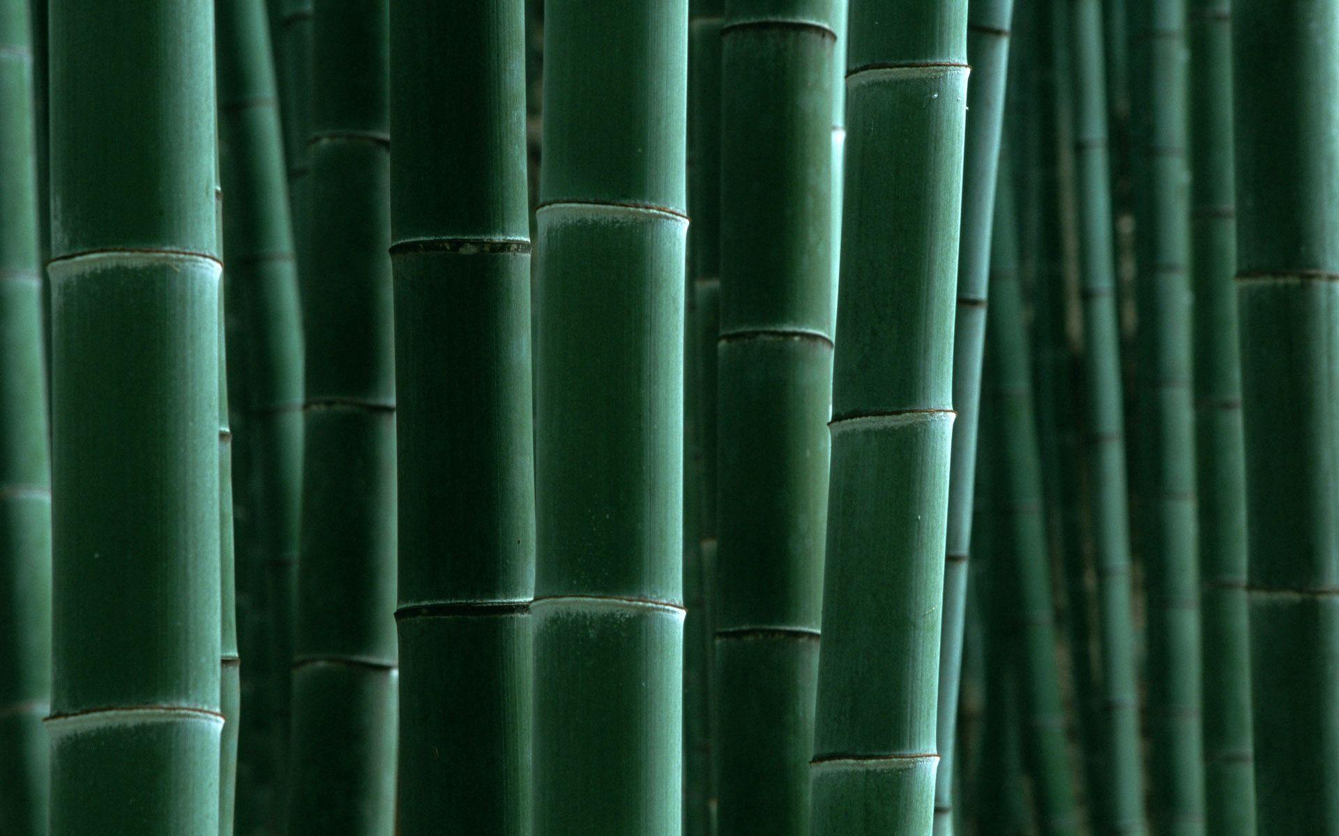 146831 download wallpaper Nature, Bamboo, Stripes, Strips screensavers and pictures for free