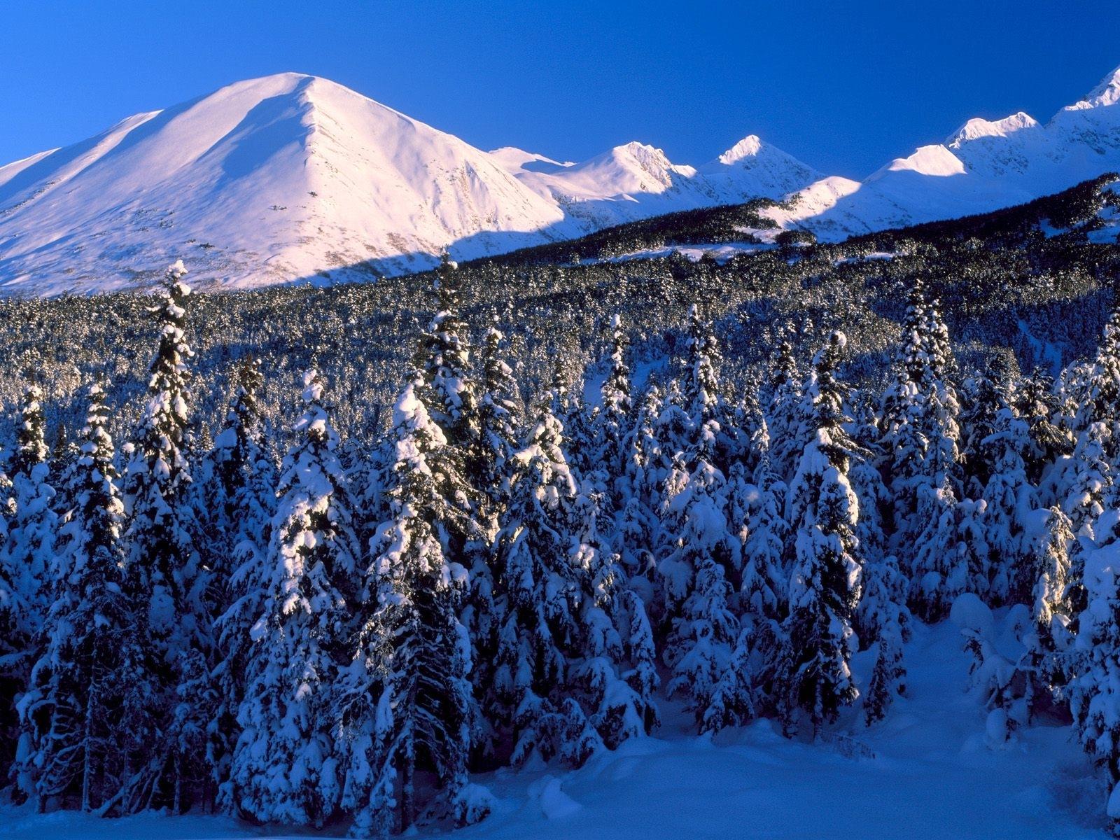3224 скачать обои Пейзаж, Зима, Деревья, Горы, Елки - заставки и картинки бесплатно