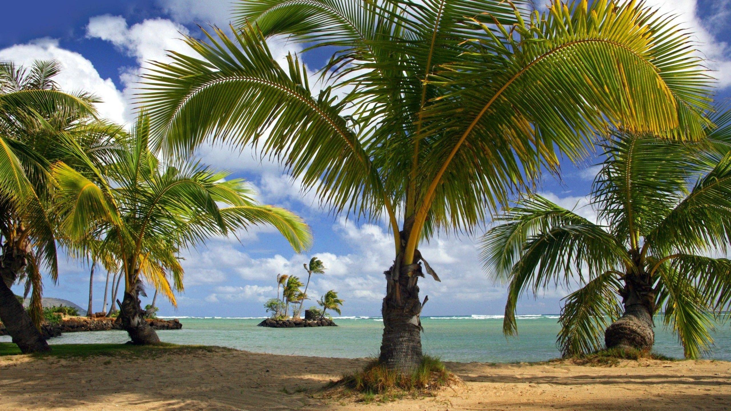 97042 Заставки и Обои Песок на телефон. Скачать Природа, Пляж, Море, Песок, Лето картинки бесплатно
