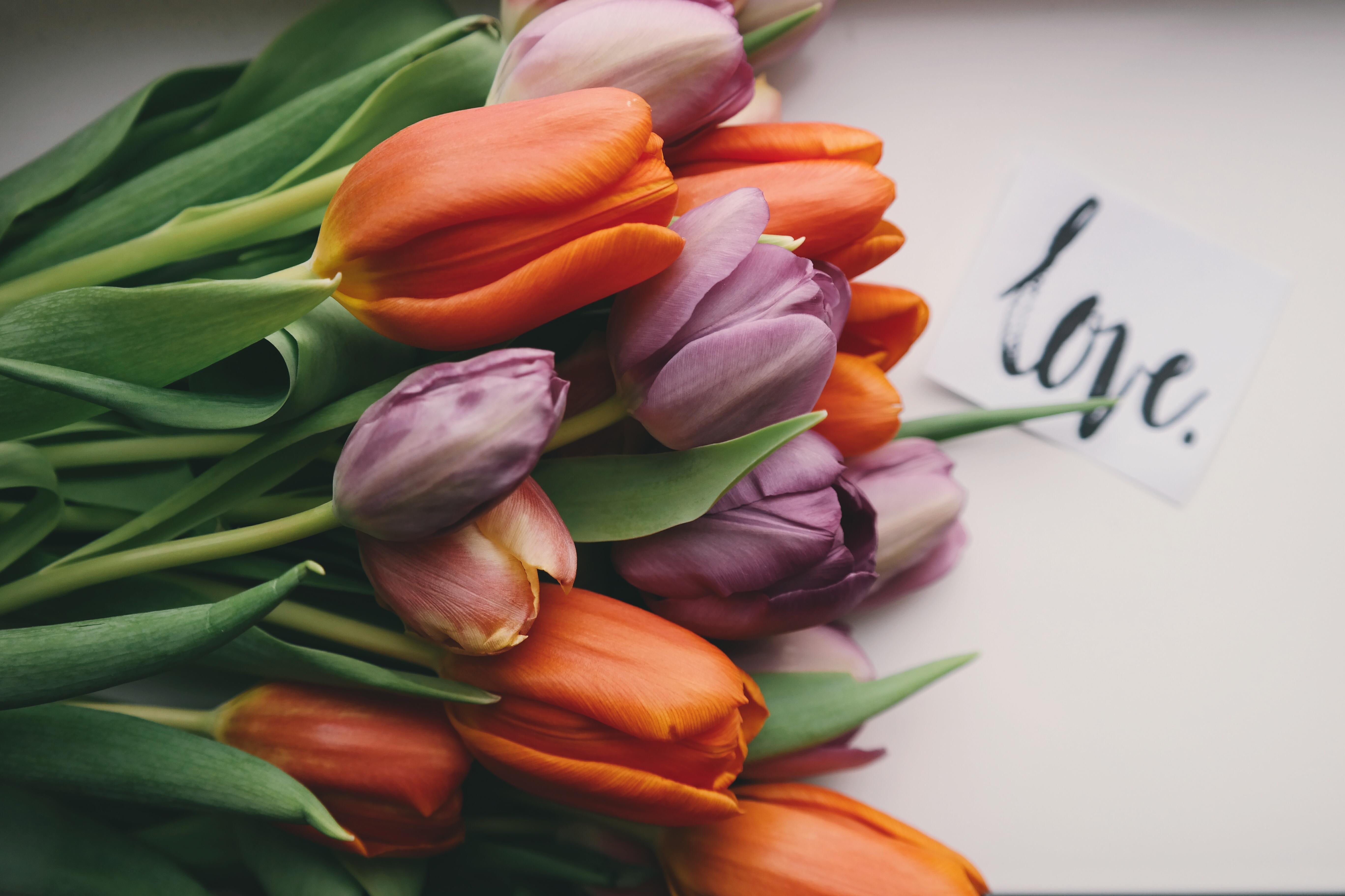 66320 descargar fondo de pantalla Flores, Ramo, Cogollos, Brotes, Tulipanes: protectores de pantalla e imágenes gratis