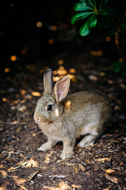93971 скачать обои Животные, Кролик, Милый, Заяц, Животное - заставки и картинки бесплатно