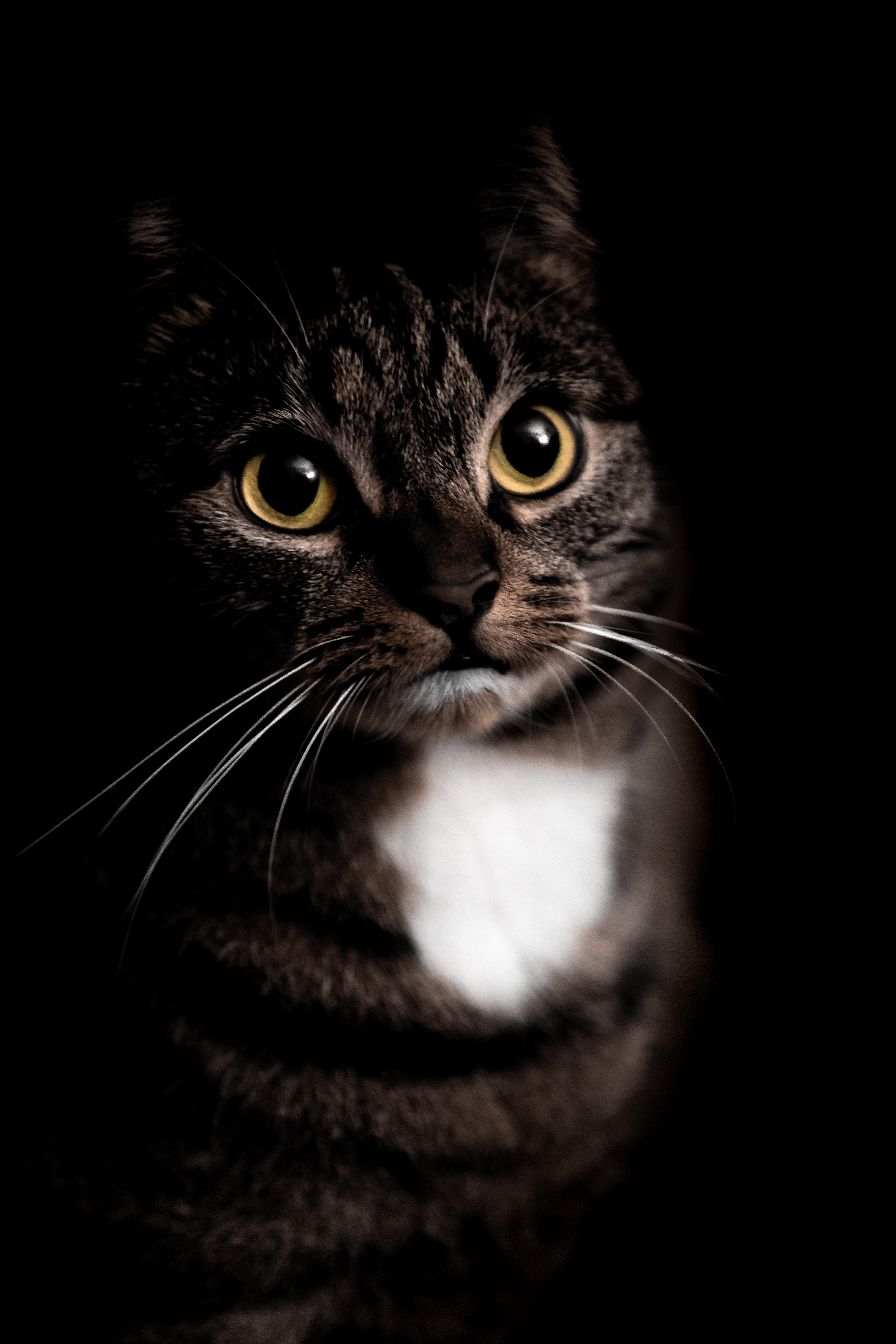 63232 Protetores de tela e papéis de parede Animais em seu telefone. Baixe Animais, Gato, Bicho De Estimação, Animal De Estimação, Visão, Opinião, Animal fotos gratuitamente