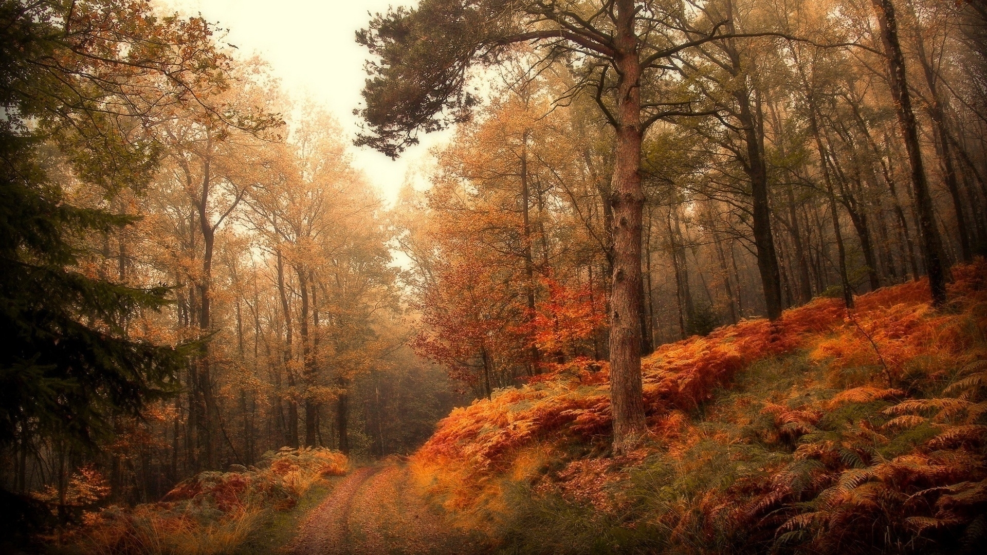 30062 download wallpaper Landscape, Trees, Autumn screensavers and pictures for free