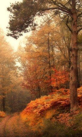 30062 скачать обои Пейзаж, Деревья, Осень - заставки и картинки бесплатно