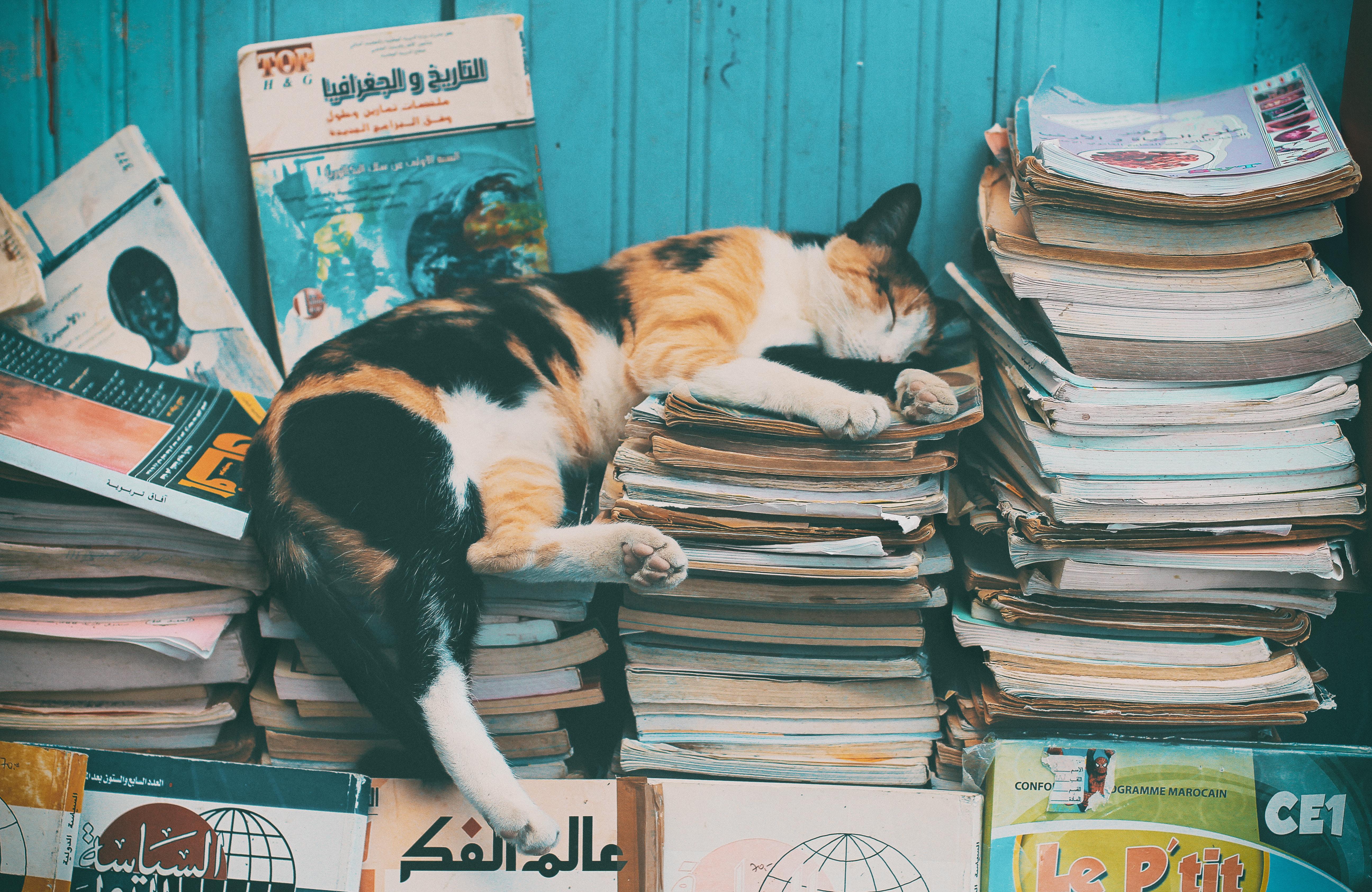119644 Hintergrundbild herunterladen Tiere, Bücher, Der Kater, Katze, Entspannung, Ruhepause, Schlafen, Traum, Protokolle, Zeitschriften - Bildschirmschoner und Bilder kostenlos