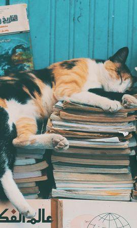 119644壁紙のダウンロード動物, ネコ, 猫, 睡眠, 夢, 雑誌, ログ, リラクゼーション, 休む, 図書-スクリーンセーバーと写真を無料で