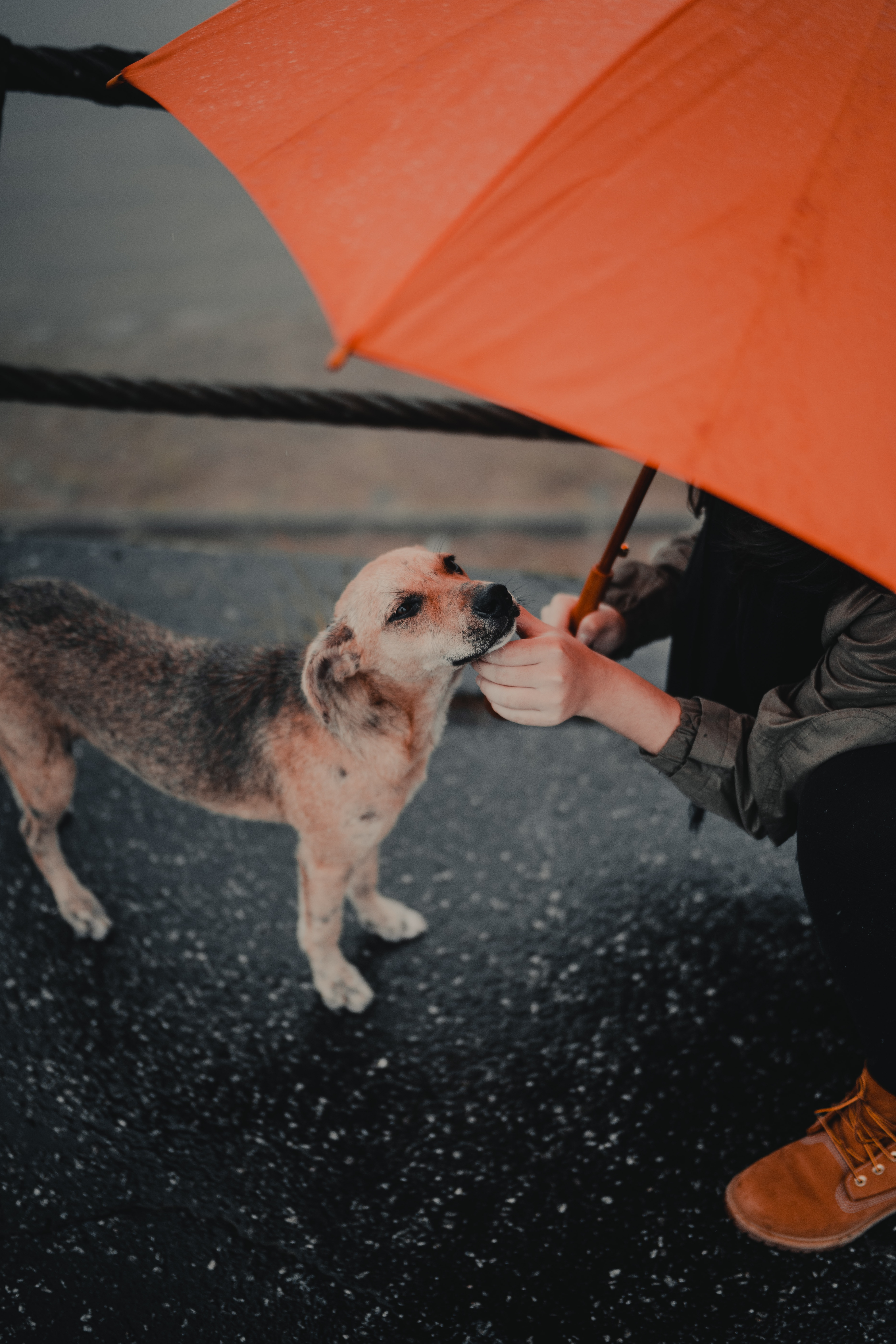 104380 download wallpaper Miscellanea, Miscellaneous, Dog, Human, Person, Umbrella, Pet, Street screensavers and pictures for free