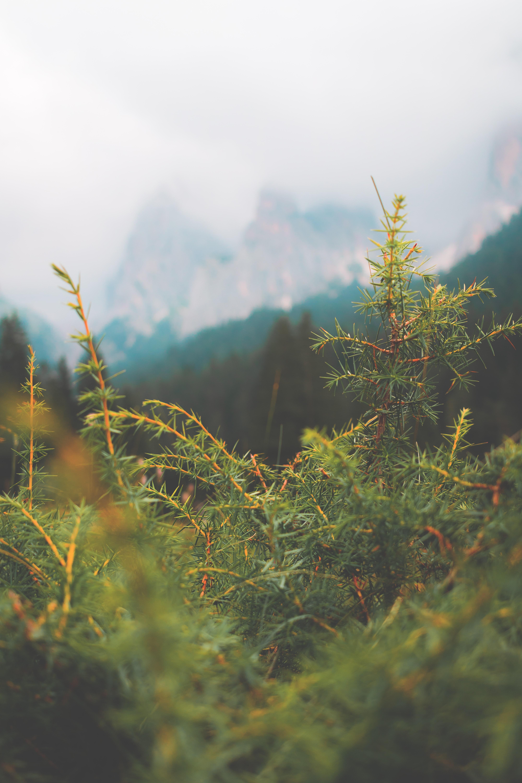 74595 Заставки и Обои Иголки на телефон. Скачать Природа, Иголки, Макро, Зеленый, Пихта картинки бесплатно