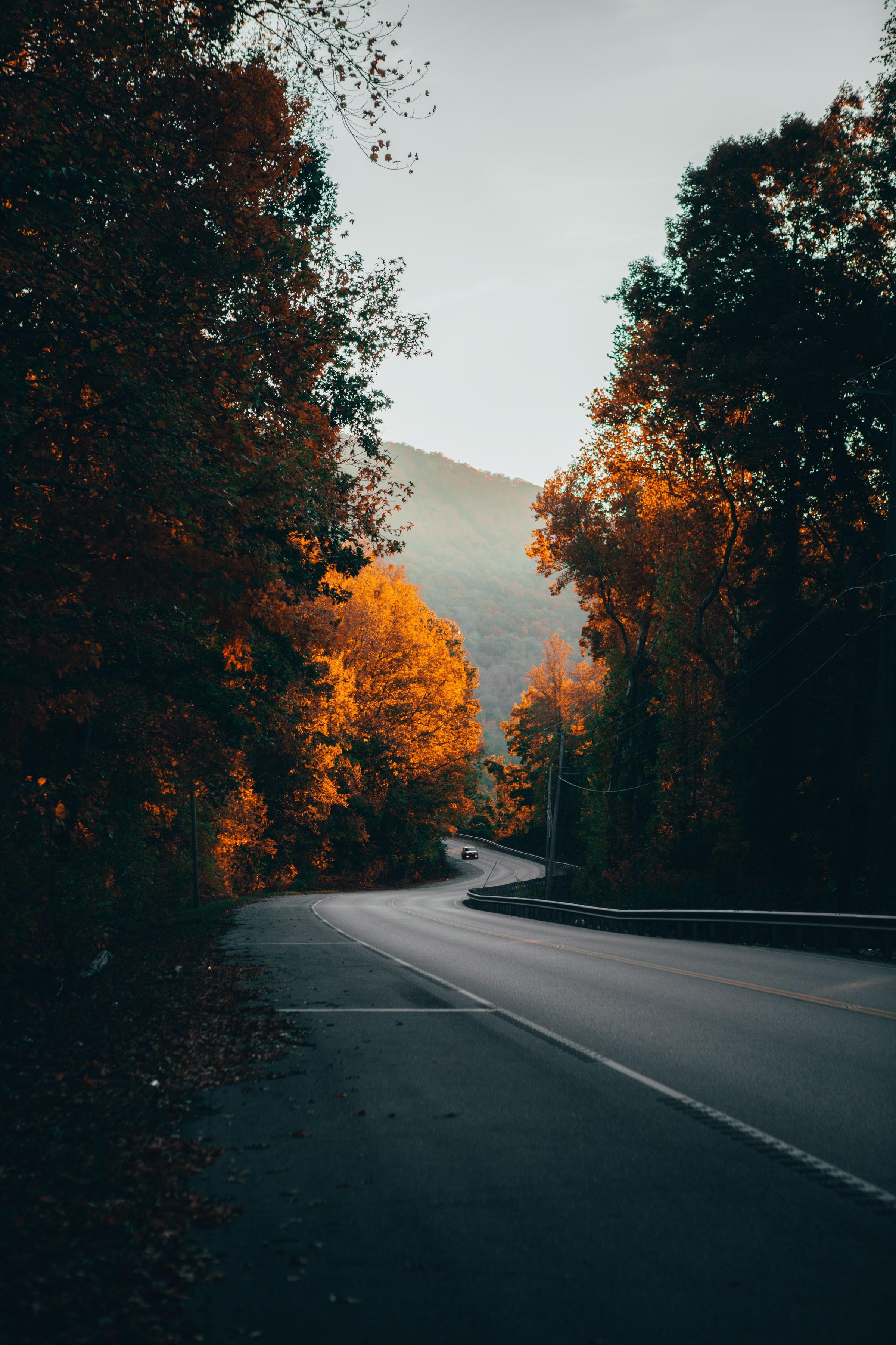 81095 скачать обои Природа, Деревья, Дорога, Туман, Машина - заставки и картинки бесплатно
